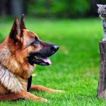 Pets: Healing Cancer with Omega Oil